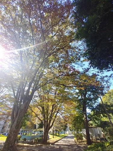 2018-11-04T00:18:00.JPG