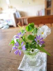 ベランダのお花よ~~~~し♪.jpg
