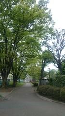 団地の中が新緑で綺麗.jpg