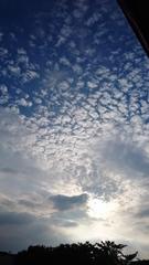 夕方の空 雲は秋雲.jpg