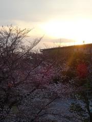 夕陽とさくら あららカメラカメラ(笑).jpg