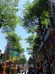 街路樹も美しい.jpg